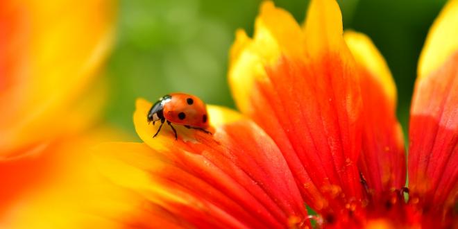 Ladybug Spirit Animal